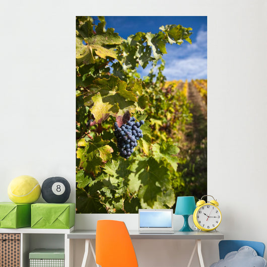 Photo Port Wine Grapes Wall Mural