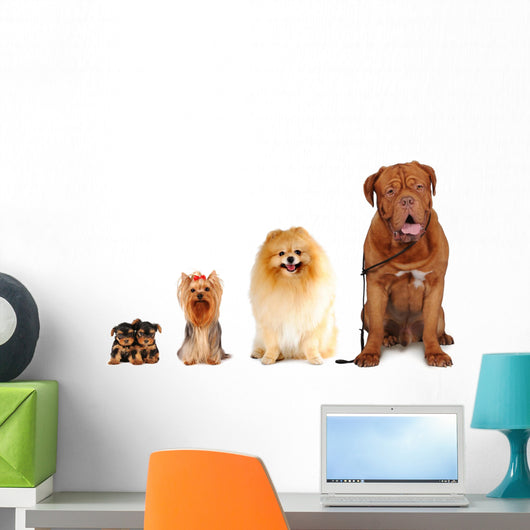 Group of dogs different sizes isolated Wall Decal