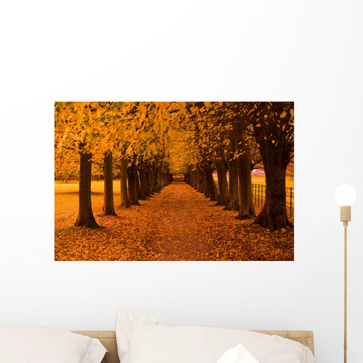 Autumn Colors in the Forest Wall Mural