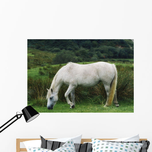 Connemara Pony Wall Mural