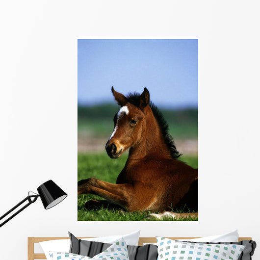 Thoroughbred Foal, Co Kildare, Ireland Wall Mural