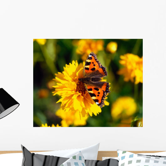 Red Admiral Butterfly On Tickseed Wall Mural