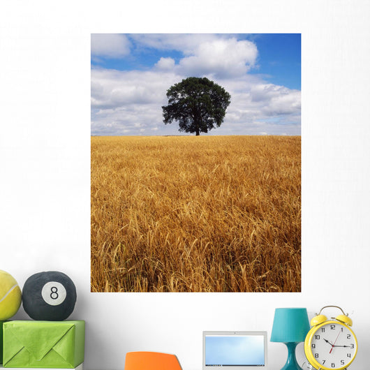 Ireland, Barley Field With Oak Tree Wall Mural