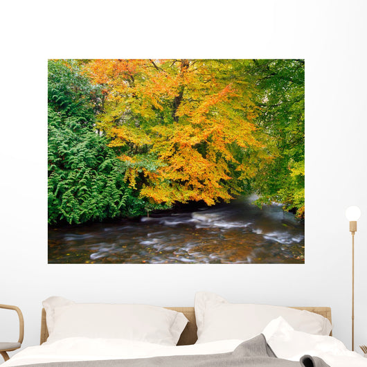 River Camcor In The Fall Wall Mural
