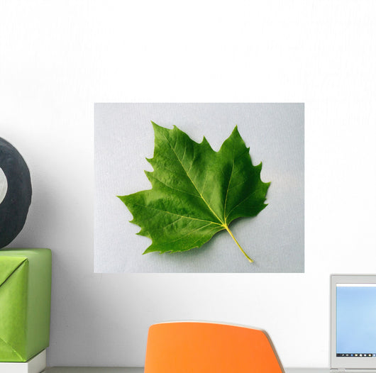 Maple Leaf Wall Mural