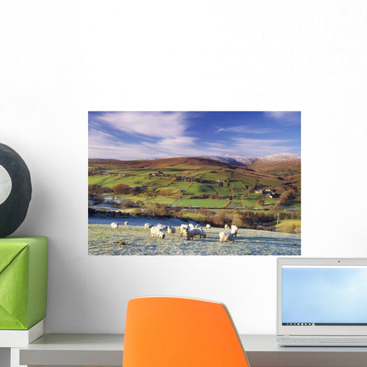 Sperrin Mountains, County Tyrone, Ireland, Sheep Wall Mural