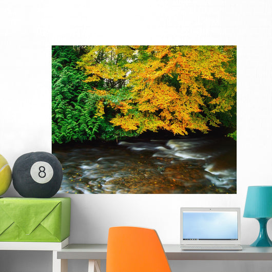 Trees Along A River Bank Wall Mural