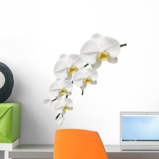 Orchid White and Purity Wall Decal