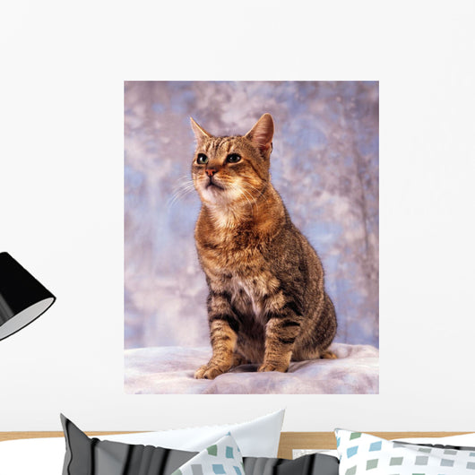 Tabby Cat Wall Mural