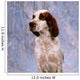 Portrait Of Irish Red And White Setter Wall Mural