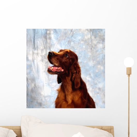Irish Red Setter Wall Mural