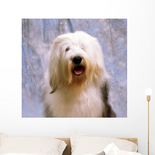 Old English Sheepdog Wall Mural