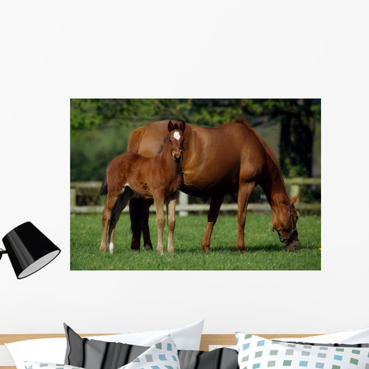 Thoroughbreds Mare & Foal, Ireland Wall Mural