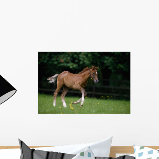 Thoroughbred Horse, National Stud, Ireland Wall Mural
