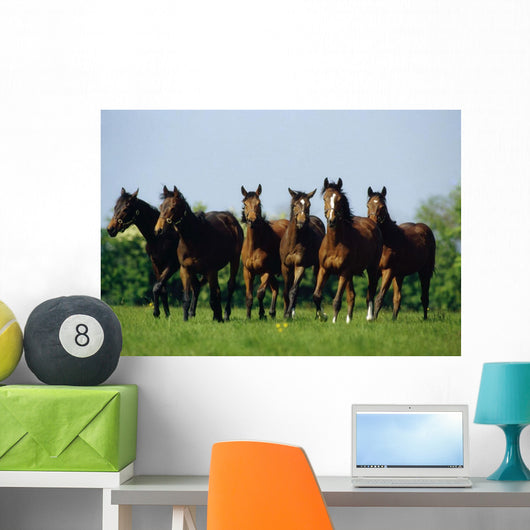 Thoroughbred Yearlings, Co Meath, Ireland Wall Mural