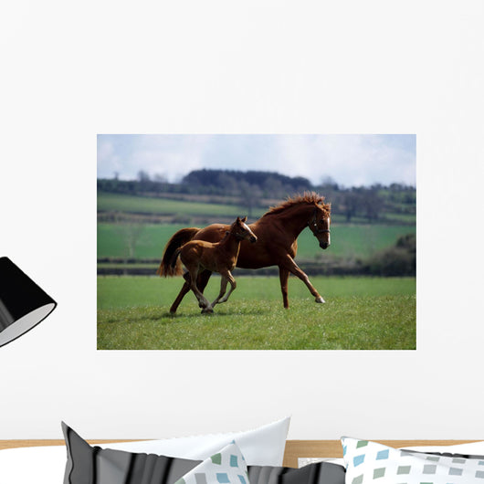 Thoroughbred Mare & Foal, Ireland Wall Mural