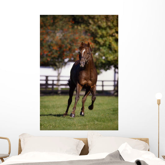 Thoroughbred Horse, Ireland Wall Mural