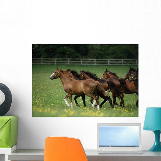 Thoroughbred Horses, Ireland Wall Mural