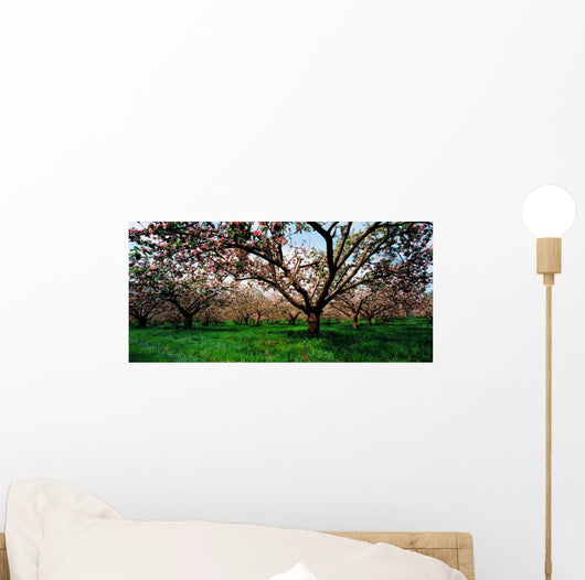 Apple Orchard, Co Armagh, Ireland Wall Mural