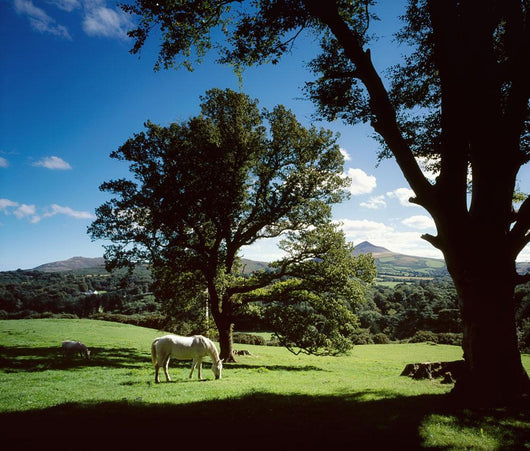 White Horse At Powerscourt, Co Wicklow, Ireland Wall Mural