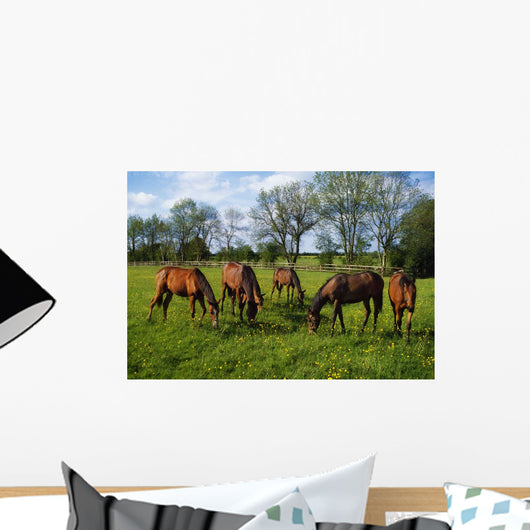 Thoroughbred Horses, Yearlings, Ireland Wall Mural