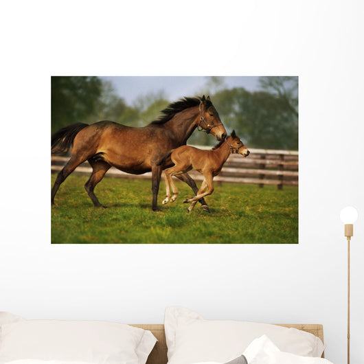 Thoroughbred Chestnut Mare & Foal, Ireland Wall Mural