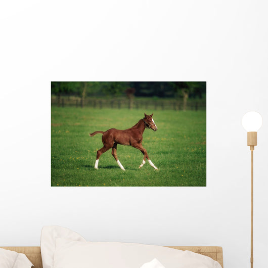 Thoroughbred Mare, National Stud, Kildare Town, Ireland Wall Mural