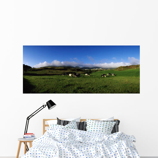 Friesian Cattle, Allihies, Co Cork, Ireland Wall Mural