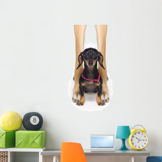 Great Dane And A Dachshund Wall Mural