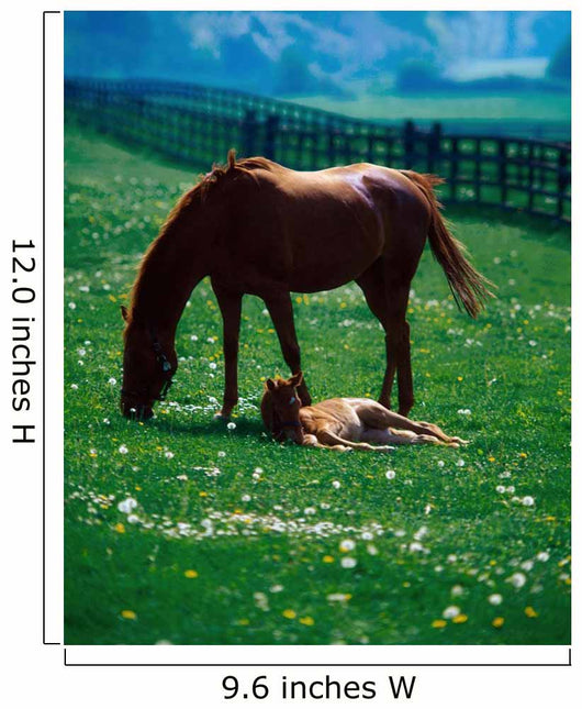 Thoroughbred Mare And Foal, Ireland Wall Mural