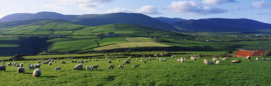 Pastoral Scene Near Anascual, Dingle Peninsula, Co Kerry, Ireland Wall Mural