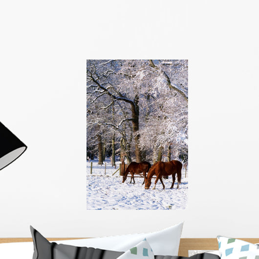 Thoroughbred Horses, Mares In Snow, Ireland Wall Mural