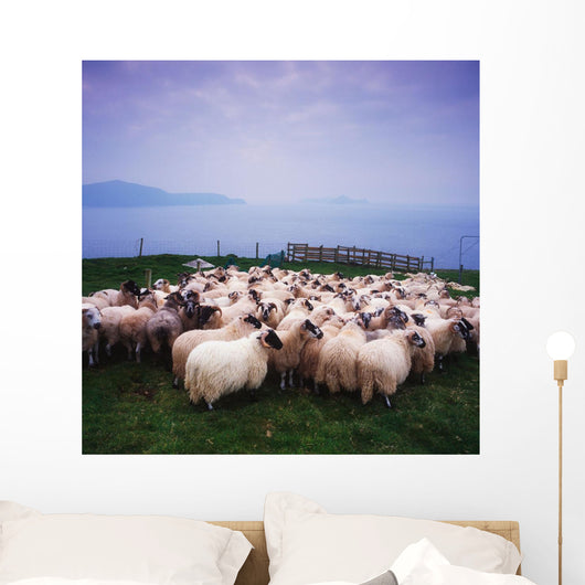Herding Sheep, Inishtooskert, Blasket Islands,Co Kerry, Ireland Wall Mural