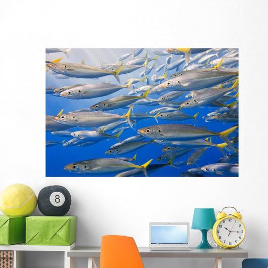 School Of Rainbow Runners, Sea Of Cortez, Mexico Wall Mural