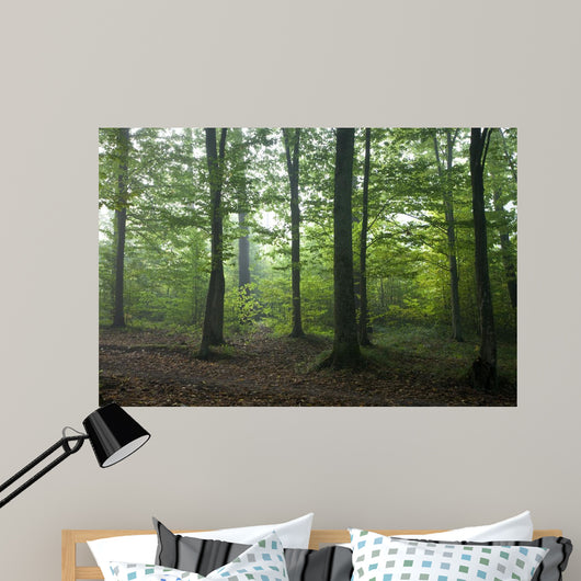 Oak and Hornbeam Trees Wall Mural