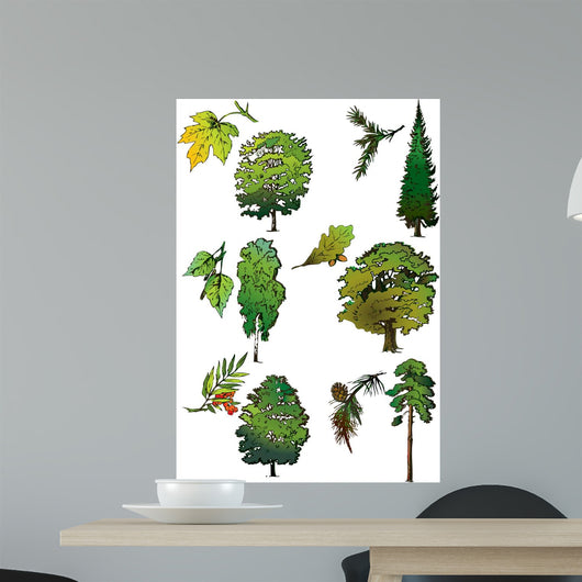 Trees and Their Leaves