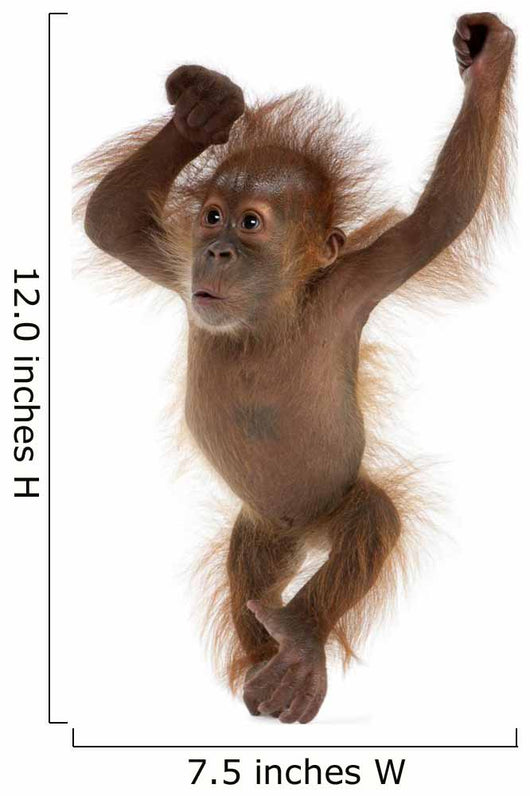 Baby Sumatran Orangutan Wall Decal