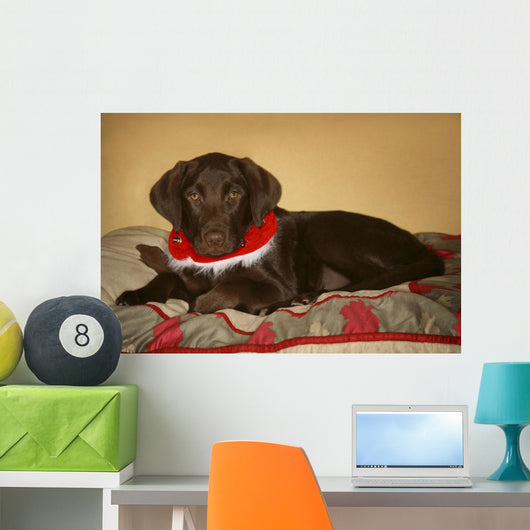 Dog With Christmas Collar Wall Mural