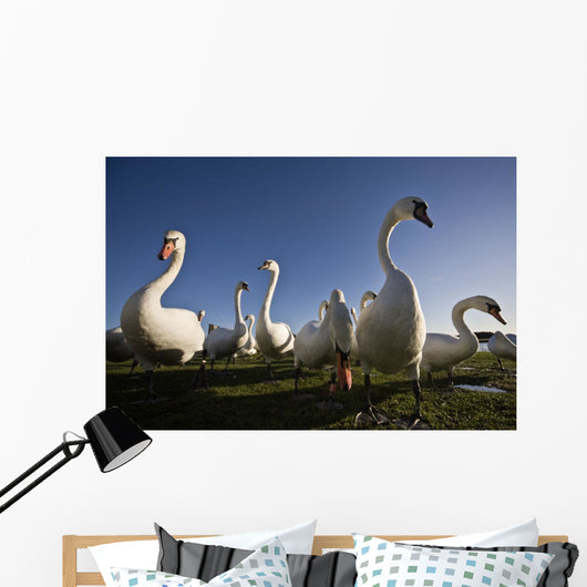 A Group Of Swans Wall Mural