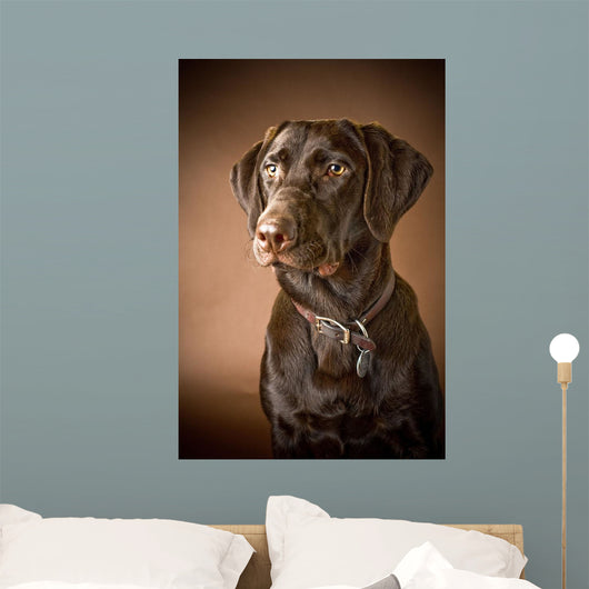 Chocolate Labrador Retriever Wall Mural