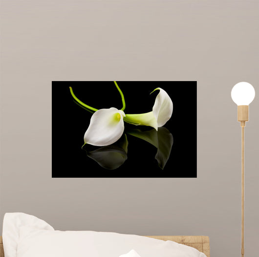 Beautiful White Calla Lilly Wall Mural
