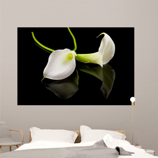 beautiful white Calla lilly over black background Wall Mural