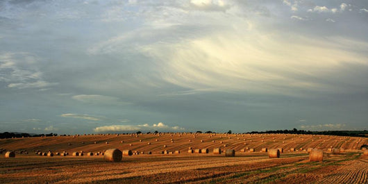 County Cork, Ireland, Hay Bales After The Harvest Near Mallow Wall Mural