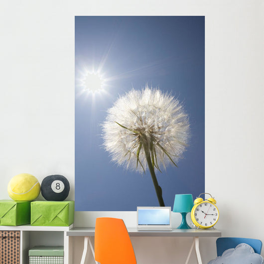 Seeded Dandelion Wall Mural