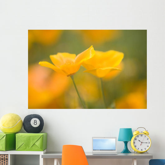 Yellow Poppy Flower, Mount Hood, Oregon, Usa Wall Mural