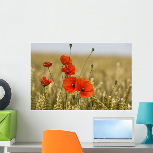 Red Poppies In A Field Of Grain Wall Mural