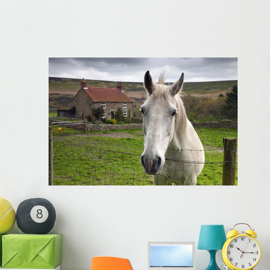Horse Peering Over Fence, North Yorkshire, England Wall Mural