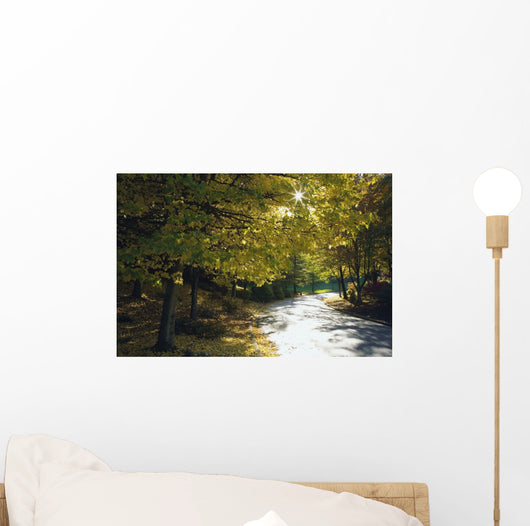 Road Among Autumn Trees Wall Mural