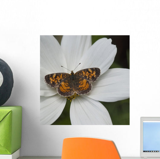 Butterfly On White Flower Wall Mural