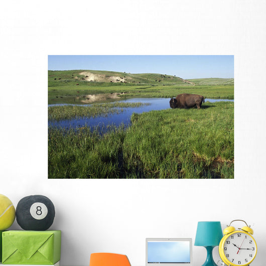 Bison At Edge Of Pool Wall Mural